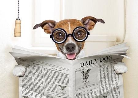 AdBlock Crazy Dog liest Zeitung