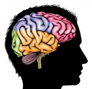 "Titelbild ""Hirnforschung"" zum Buch ""Think Limbic!"""